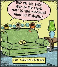 3 Easy to Teach Dog Tricks Funny Cat Jokes, Funny Cartoons, Cat Memes, Cats Humor, Funny Comics, Animal Jokes, Funny Animals, Animal Funnies, Crazy Cat Lady