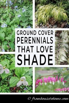 These shade loving perennial ground cover plants are AWESOME! So many pretty flowers that will look great in my backyard shade garden. Backyard Shade, Shade Garden, Deck Shade, Backyard Plants, Indoor Garden, Part Shade Perennials, Sun Perennials, Ground Orchids, Virginia Bluebells