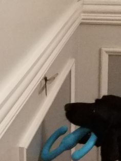 A dragonfly got into the house and Cooper wanted to share his toys http://ift.tt/2q91D3T