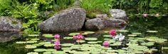 Making a garden pond