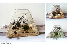 Marimo Moss Ball  Large Pyramid Aquarium by PinkSerissa on Etsy, $25.00