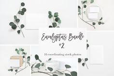 Stock Photos | Eucalyptus Bundle #2 by TwigyPosts on @creativemarket