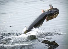 Catch More Pike On Lures – Mick Brown
