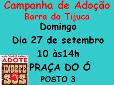 BONDE DA BARDOT: RJ: Adoção de cães e gatos na Barra da Tijuca, neste domingo (27/09)
