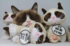 Tardar Sauce with Grumpy Cat stuffed toys. This was on Tard's official Facebook Page, May 2014. #Tard #TardarSauce #GrumpyCat