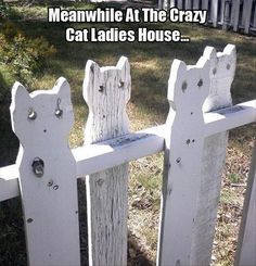 Cyber cats on a fence.darling fence in Fort Collins, Colorado Crazy Cat Lady, Crazy Cats, Funny Images, Funny Pictures, Unique Garden, Cat Fence, Fence Posts, Fort Collins, Yard Art