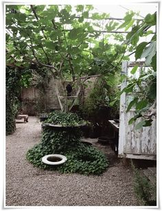 House Plant Maintenance Tips Helt Enkelt Inredning Foto Inspiration Sida 3