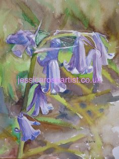 Bluebell with Cobweb  (watercolour)