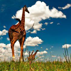 Masai Mara, KE