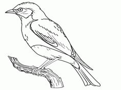 Missouri Free Bluebird Coloring Page