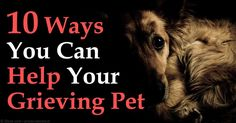 Signs of grief in pets include changes in sleeping or eating habits, lethargy, clinginess, and repeated searching from room to room for the pet that has passed. http://healthypets.mercola.com/sites/healthypets/archive/2015/09/19/helping-surviving-pet-deal-with-loss.aspx