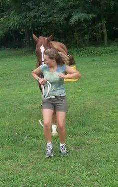 everyday handling for a safe horse