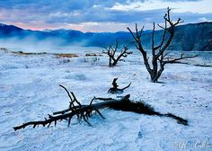 Mammoth Hot Springs Trees-photo by Grant Collier