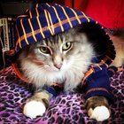 Merlin is the cutest cat in the hood.