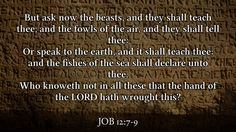 Daily Bible Verse  Job 12:7-9 www.SearchTheBible.com