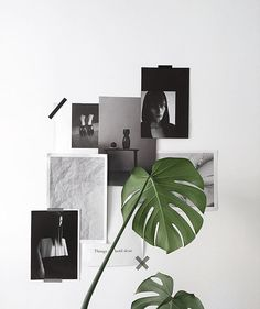 minimal black and white mood board inspiration for a home office: green monstere plant leaf in a vase