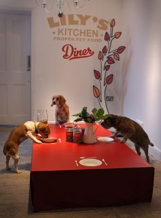 Restaurant for Dogs!  It is now possible to bring your dog to a restaurant for dogs!