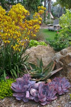 My Favorite Plant Combinations 71