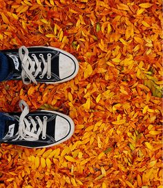 Leaves in the fall shoes