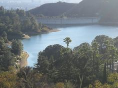 For some reason the Hollywood Reservoir reminds me of a scene from Jurassic Park