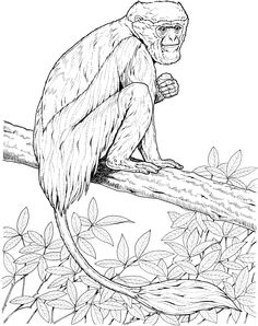 Colobus Monkey Coloring Page