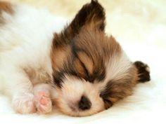 Awww I want him! ツ
