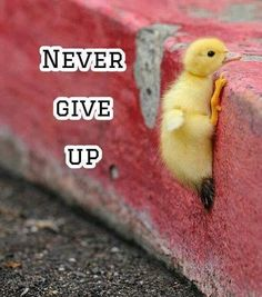 Never give up!                                                                                                                                                                                 More