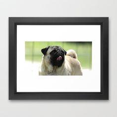 Pug face Framed Art Print by Veronica Ventress - $35.00
