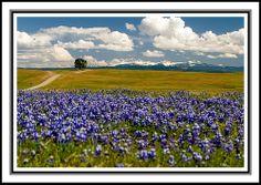 Millville Plains - Redding, CA  Mark Behrens