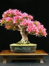 Resultado de imagen para bonsai con flores
