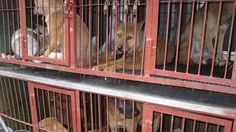 Petition · Ohio Governor: Contact Governor of Ohio to Help Stop the Dog and Cat Meat Trade in Gyeongsangbuk-do Province, South Korea! · Change.org