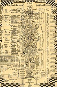 Tech Discover Der okkulten Anatomie-Druck Kabbalah Alchemie Baum des symbols italian The Occult Anatomy Print - Wiccan Magick Witchcraft Rose Croix Kundalini Les Chakras Yoga Chakras Human Body Art Occult Art Tantra, Tarot, Kundalini, Les Chakras, Yoga Chakras, Human Body Art, Occult Art, The Occult, Book Of Shadows
