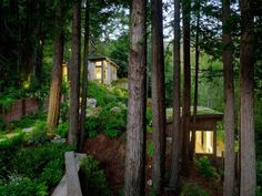 A duo of unique small cabins nestles into the wooded hillside near Mill Valley, California.