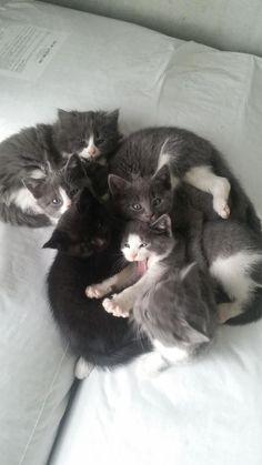 Kitty pile!!  via: http://more.pet/2dAQHmq