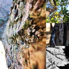 Point of View Tree Photography by NyxStudioArt Tree Photography, Point Of View, Diy Art, North America, Artwork, Nature, Painting, Travel, Voyage