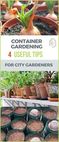 If you want to start container gardening, read this article. Many types of plants can grow in containers, although there are some things to keep in mind. #urbangardening #urbanfarming #gardening #diy #garden #ugrpost