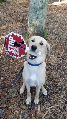 Arleigh has joined the STOP 22 campaign.....Has your Dog? www.k9sforwarriors.org