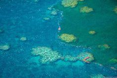 Αργοπεθαίνει ο Μεγάλος Κοραλλιογενής Ύφαλος  thetoc.gr