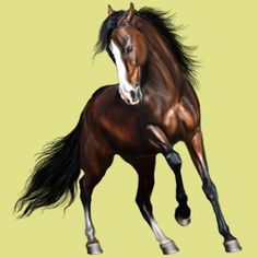 Howrse horse by D Helows