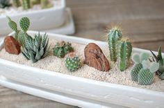 Hermosa jardinera blanca con cactus, crasas y piedras ☼₪☼₪☼₪☼₪