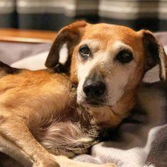 I'm a Senior Doggo Food Dog, Pet Food Storage, Cute Dog Photos, Dog Boarding, Dog Supplies, Dog Grooming, Dog Owners, Dog Toys, Snuggles