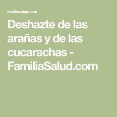 Deshazte de las arañas y de las cucarachas - FamiliaSalud.com