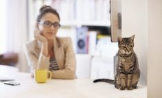 Everything in it's Place: Tips for Effectively Pet Proofing Your Home