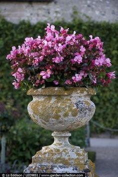 魅力的なお庭に欠かせないのは、視線が自然と惹きつけられるようなフォーカルポイント。エアコンの室外機などの見せたくない物から視線をそらす効果もあります。