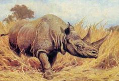 Stephanorhinus is an extinct genus of rhinoceros native to northern Eurasia that lived during the Lower to Early Late Pleistocene epoch. It had two horns and was a relatively large rhino. It weighed over 3,000 kg (6,613 lbs) and measured about 1.80 – 2 m tall and 3.20 – 4 m in length, having a size similar to a white rhino.