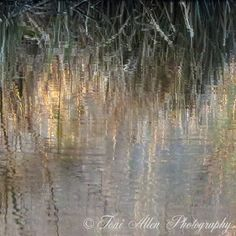 Reflected Grasses with frost in March A set of four photos. Tall winter grasses, tipped by frost, reflected on a pond. High quality prints available in a variety of sizes. Create unique wall art for your home or office. Unique Wall Art, Grasses, Abstract Photography, Pond, Frost, Reflection, March, Waves, Create