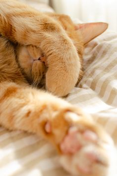 Cute Baby Cats, Cute Cats And Kittens, Cute Dogs, Pretty Cats, Beautiful Cats, Cat Paws, Dog Cat, Chats Tabby Oranges, Gatos Cool