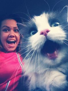 Images on cats (Selfie TOP 21)