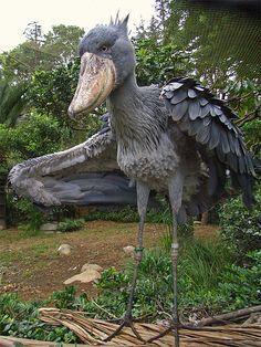 shoebill bird in flight - Google Search