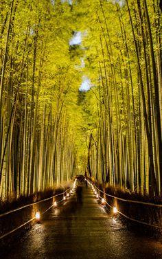 Arashiyama Bamboo Forest, Kyoto, Japan.
